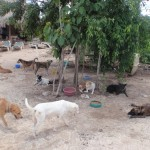 Everyone hanging out at Tierra de Animales