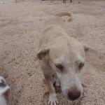 Happy doggy at Tierra de Animales