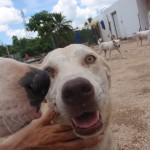 dogs at Tierra de Animales