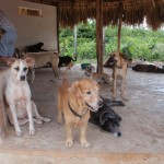 dogs at Tierra de Animales