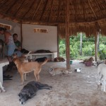 dogs and vets at Tierra de Animales