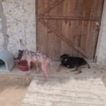 Dogs in rehabilitation at Tierra de Animales
