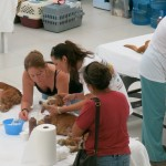 CANDi Spay and Neuter Clinic Cancun