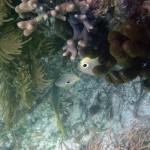 Coral Reef in Puerto Morelos