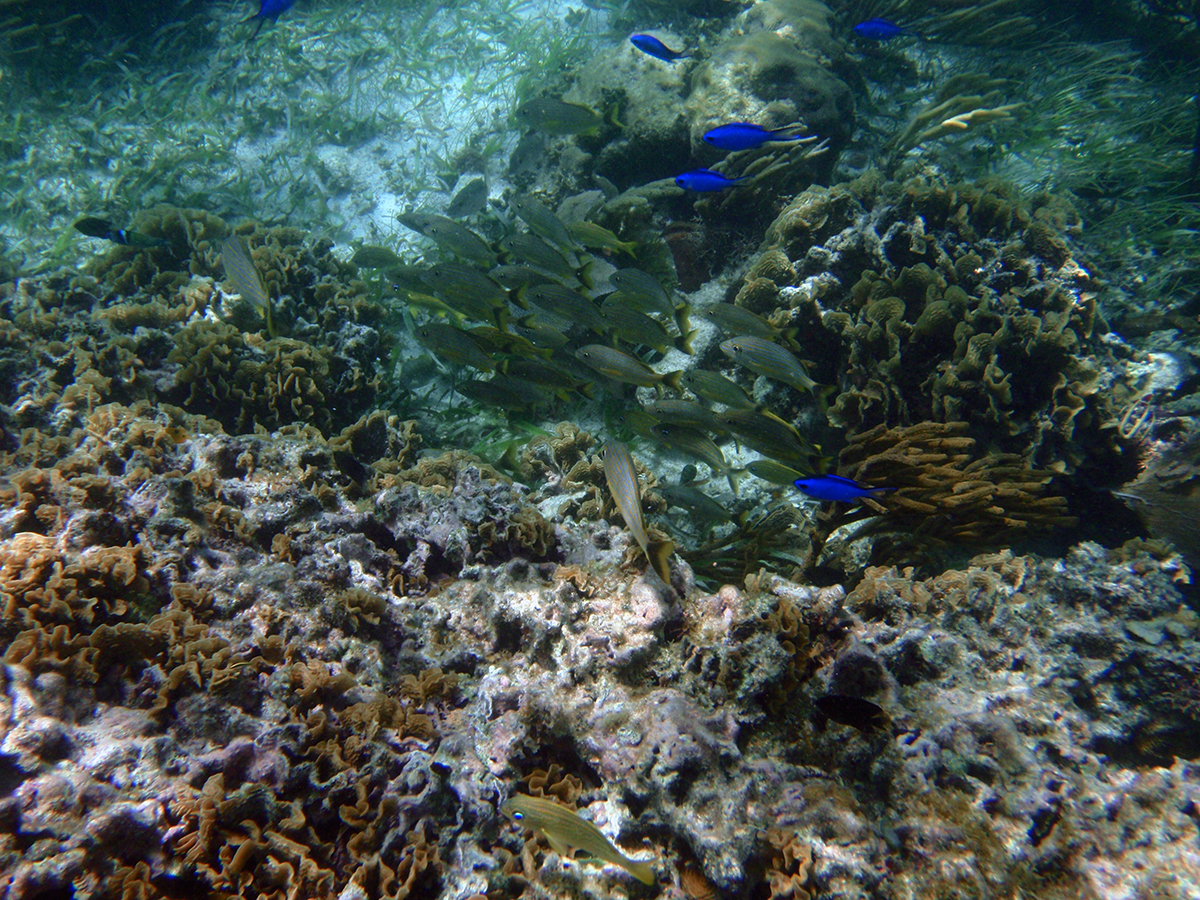 The best snorkeling in cancun carm blog for Reef tropical fish
